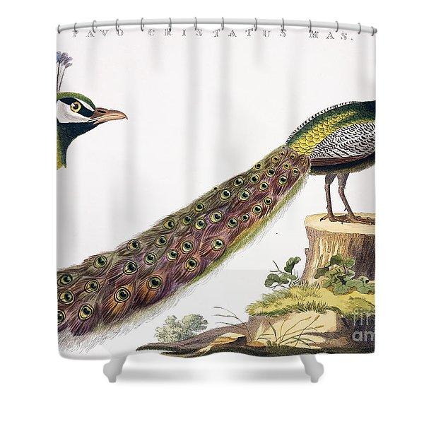 Peafowl Shower Curtain
