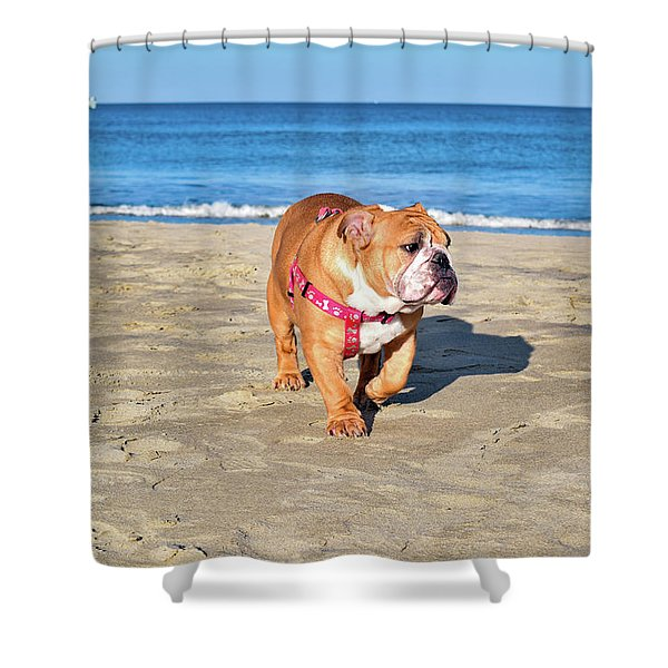 Peanut On The Beach Shower Curtain