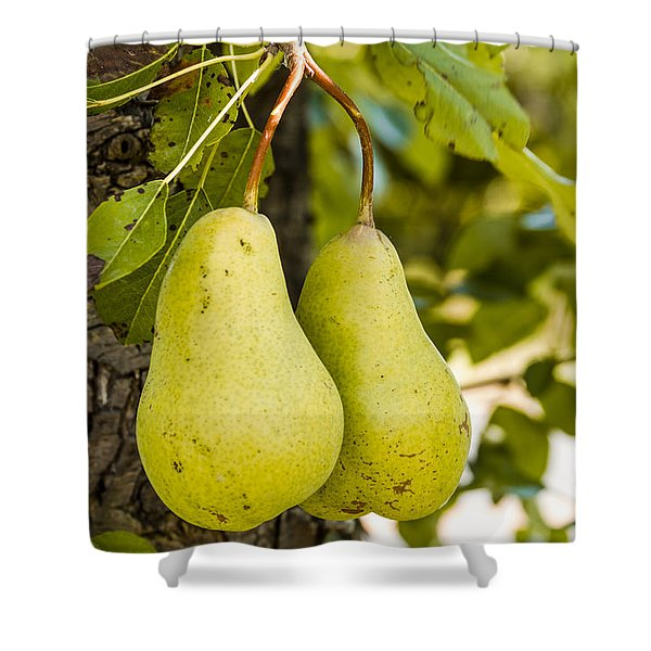 Pears 2 Of A Kind Shower Curtain