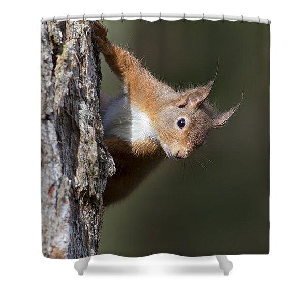 Peekaboo - Red Squirrel #29 Shower Curtain