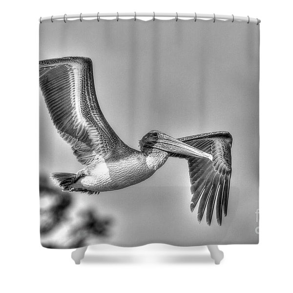Pelican-4443 Bnw Shower Curtain