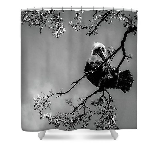 Pelican Connection Shower Curtain