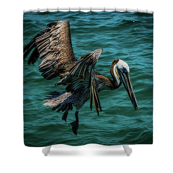 Pelican Glide Shower Curtain