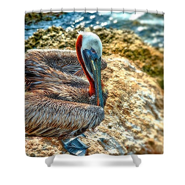 Pelican II Shower Curtain