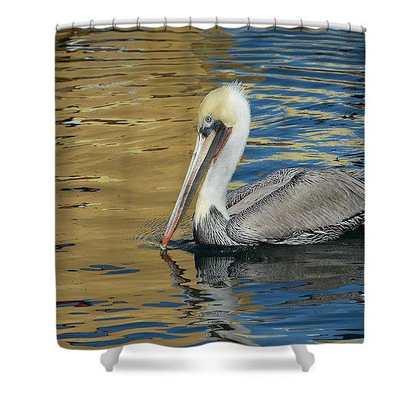 Pelican In Watercolors Shower Curtain