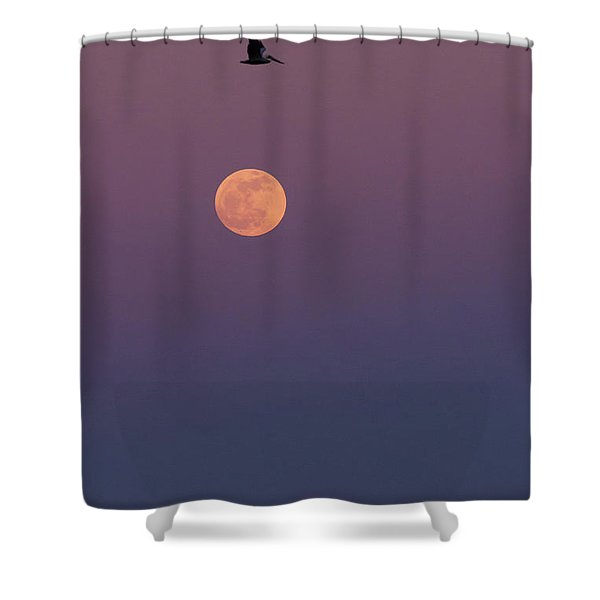 Pelican Over The Moon Shower Curtain