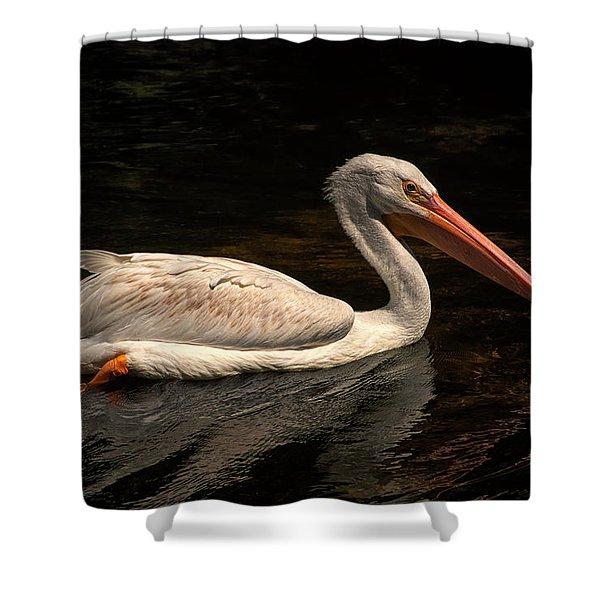 Pelican Swimming In Salisbury Shower Curtain
