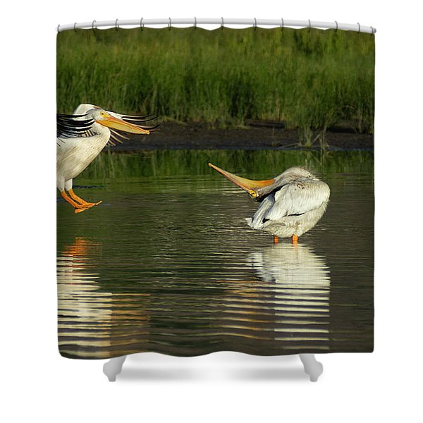 Pelicans 2 Shower Curtain