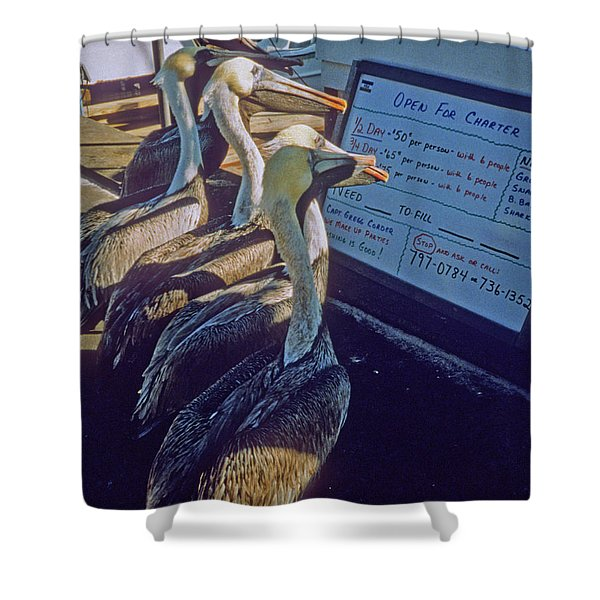 Pelicans And The Menu Shower Curtain