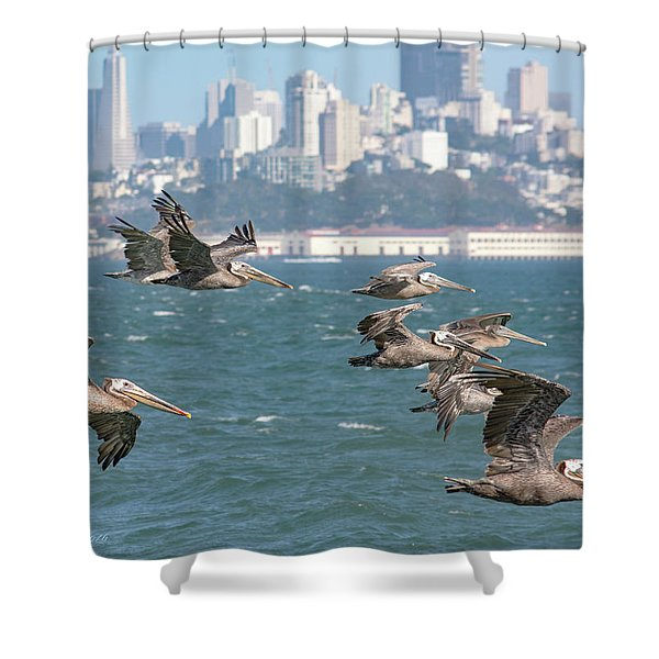 Pelicans Over San Francisco Bay Shower Curtain