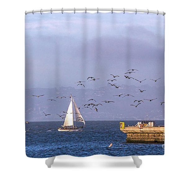 Pelicans Pelicans Shower Curtain