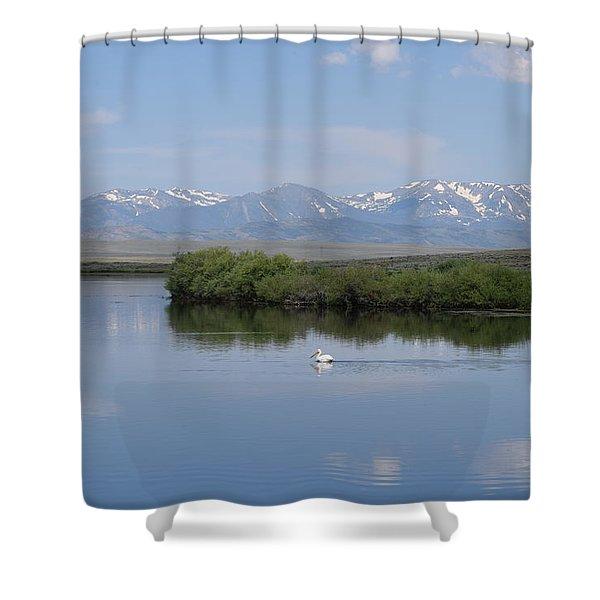 Pelicans Walden Res Walden Co Shower Curtain