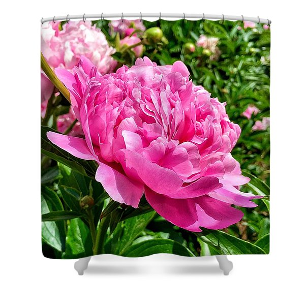 Peonies In Spring Shower Curtain
