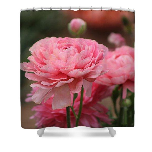 Peony Pink Ranunculus Closeup Shower Curtain