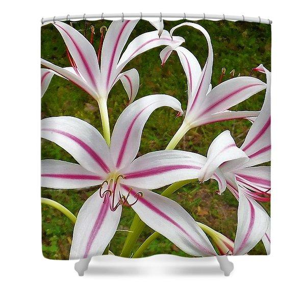Peppermint Lilies Shower Curtain
