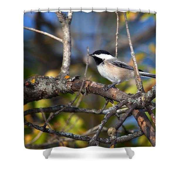 Perched Black-capped Chickadee Shower Curtain