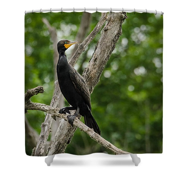 Perched Double-crested Cormorant Shower Curtain