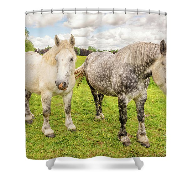 Percherons Horses Shower Curtain