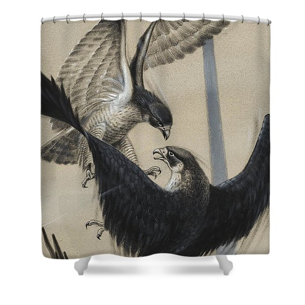 Peregrine Falcon And Kestrel Shower Curtain