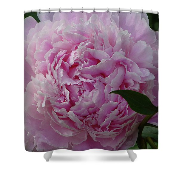 Shower Curtain featuring the photograph Perfection In Pink by Cris Fulton