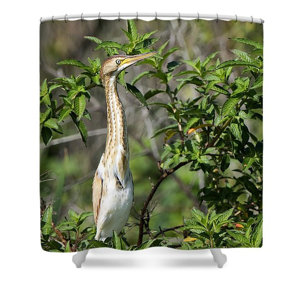 Periscope Up Shower Curtain