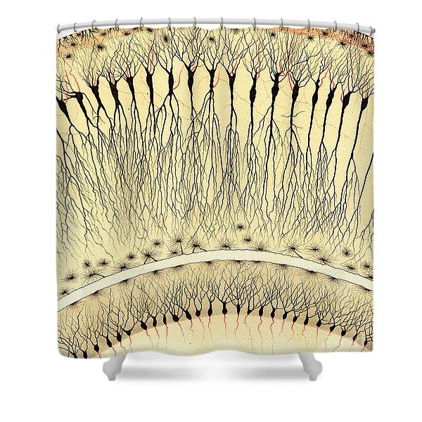 Pes Hipocampi Major Santiago Ramon Y Cajal Shower Curtain