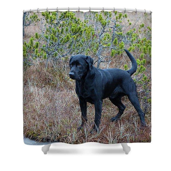 Pet Portrait - Radar Shower Curtain