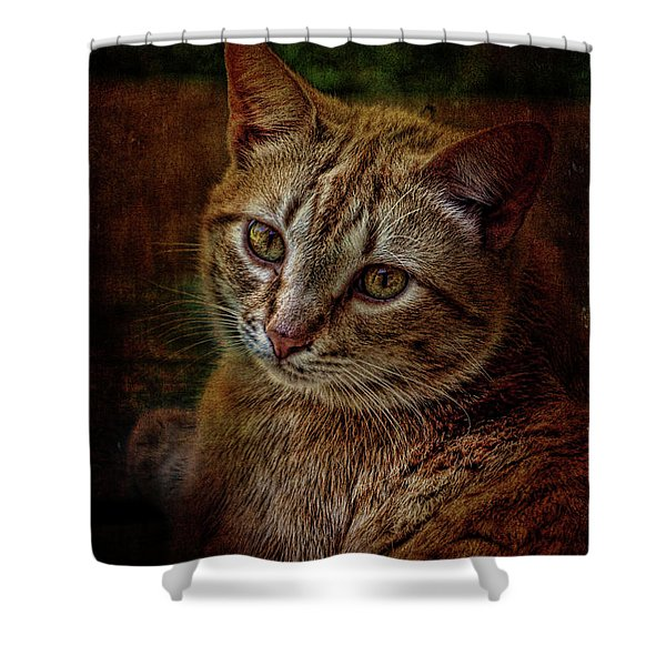 Pets Fat Cat Portrait 2 Shower Curtain