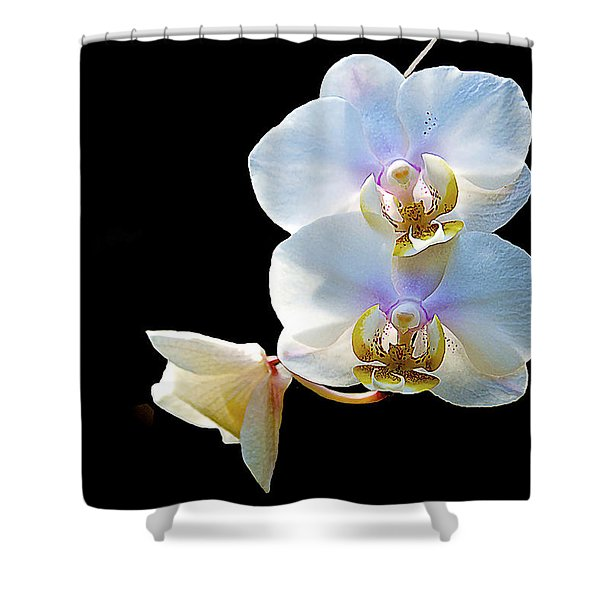 Phalaenopsis Culican #1 Nobby's Amy Shin Hua Shower Curtain