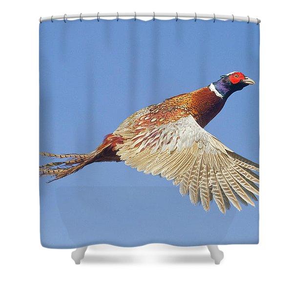 Pheasant Wings Shower Curtain