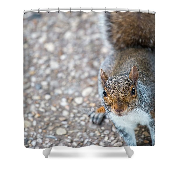 Photo Of Squirel Looking Up From The Ground Shower Curtain