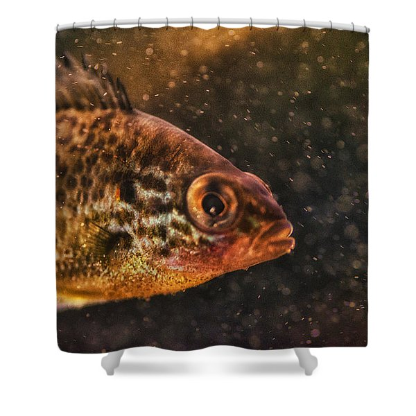 Pices In Aquarium Shower Curtain