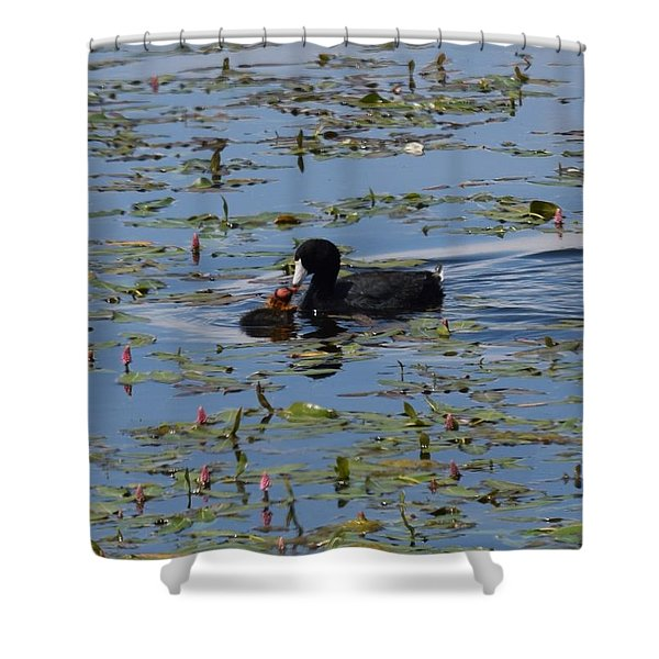 Pied Billed Grebe Lake John Swa Co Shower Curtain