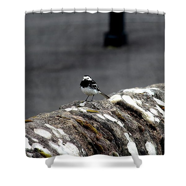 Pied Wagtail Shower Curtain