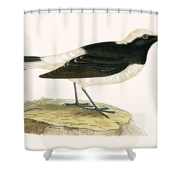 Pied Wheatear Shower Curtain
