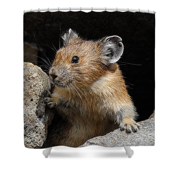 Pika Looking Out From Its Burrow Shower Curtain
