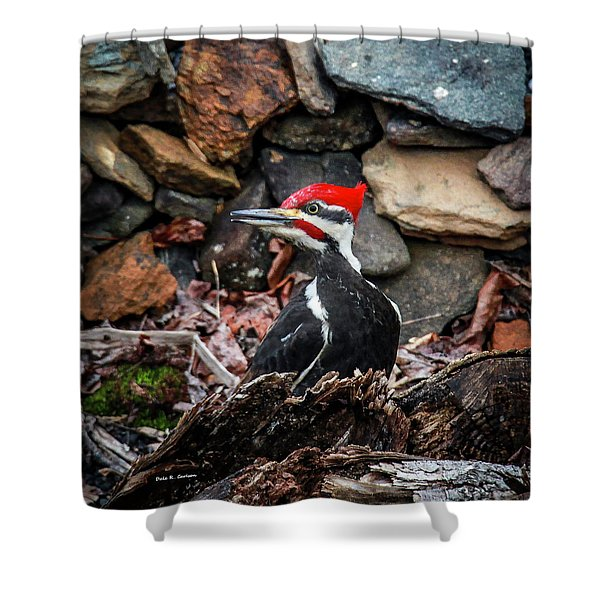 Pileated Pete Shower Curtain