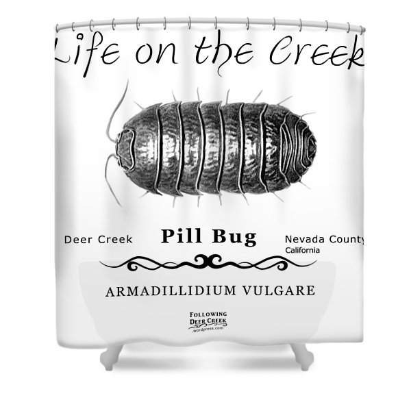 Pill Bug Armadillidium Vulgare Shower Curtain