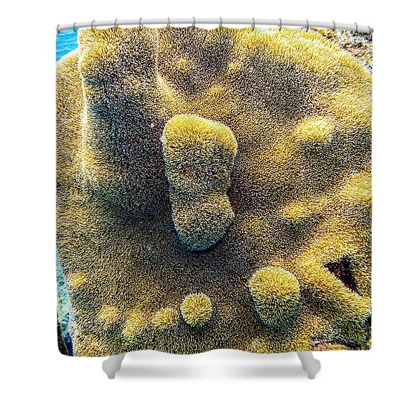 Shower Curtain featuring the photograph Pillar Coral by Perla Copernik
