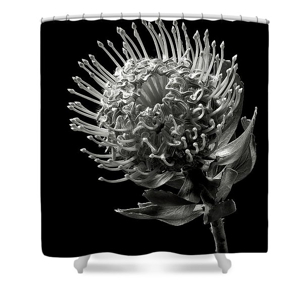 Pincushion Protea In Black And White Shower Curtain