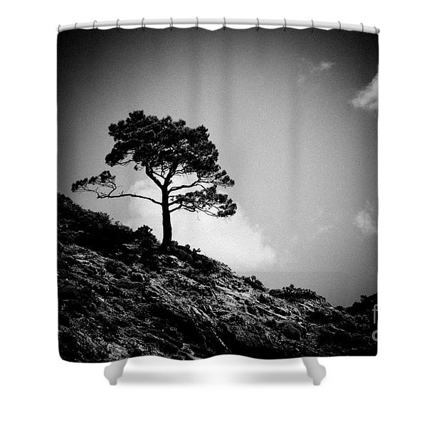 Pine At Sky Background Artmif.lv Shower Curtain