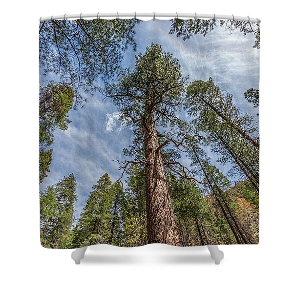 Pine Cathedral On The West Fork Shower Curtain