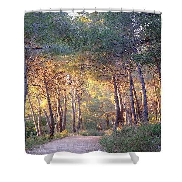 Pine Forest At Sunset Shower Curtain