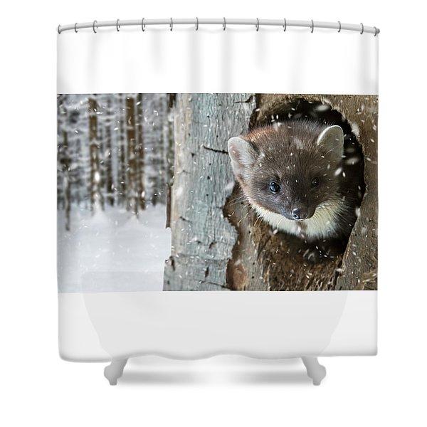 Pine Marten In Tree In Winter Shower Curtain