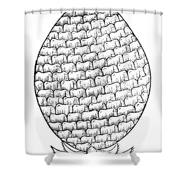 Pineapple Illustration From De La Natural Hystoria De Las Indias Shower Curtain