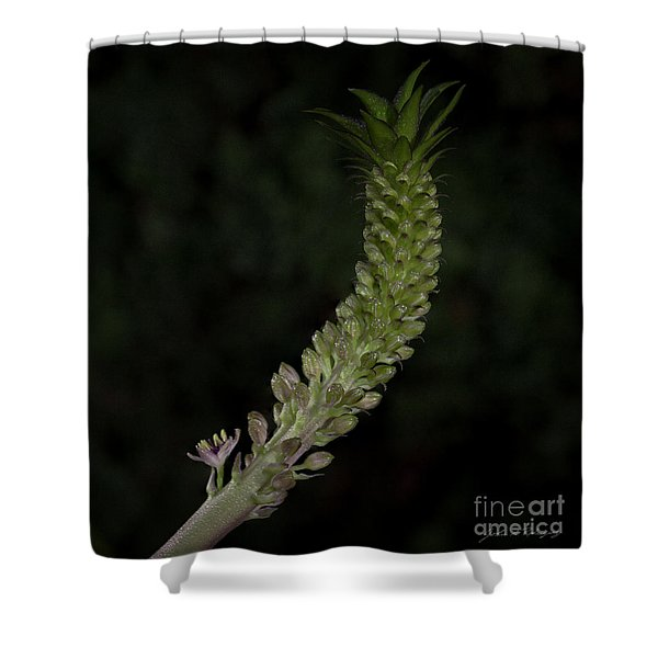Pineapple Lily Shower Curtain