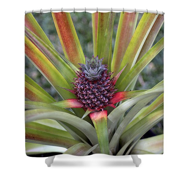 Pineapple, Oahu Shower Curtain