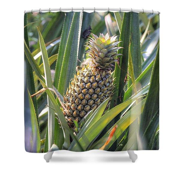 pineapple plantation in Kerala - India Shower Curtain