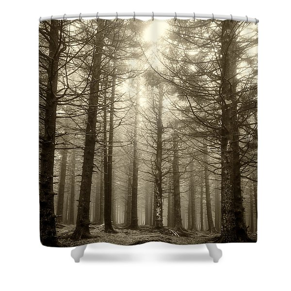 Pines-sepia Shower Curtain