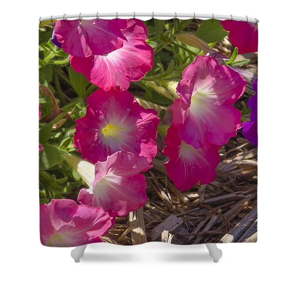 Pink And Purple Petunias Shower Curtain